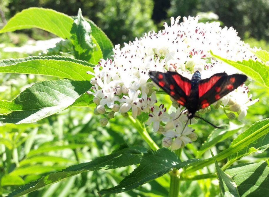 vlindertuin,tuin, giardino delle farfalle, sibillini, marken, cessapalombo, vlinder, uitje, excursie
